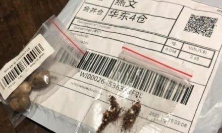 Secretaria da Agricultura alerta sobre recebimento de sementes não solicitadas do exterior